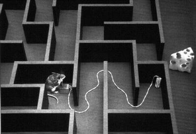 super-mouse-maze-animal-jokes-photograph